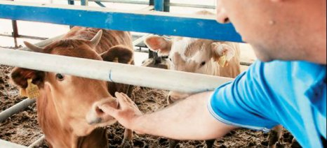 Προσλήψεις έξι κτηνιάτρων στην Περιφέρεια Ανατολικής Μακεδονίας & Θράκης