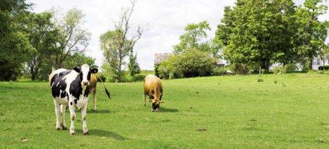 Θεσσαλονίκη: Εκδόθηκαν οι καταστάσεις πληρωμών βιολογικής κτηνοτροφίας έτους 2014