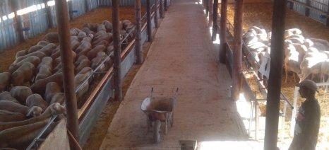 Μέχρι 10 Μαρτίου το ειδικό έντυπο του Μητρώου για τη συνδεδεμένη στην κτηνοτροφία