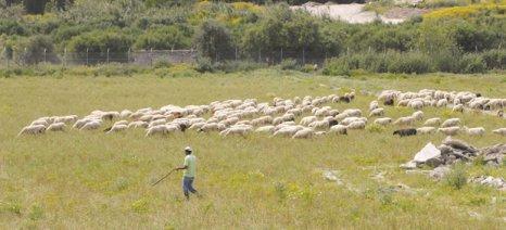 Τον κίνδυνο να χαθούν οι επιδοτήσεις κτηνοτρόφων επισημαίνει η Αντιπεριφερειάρχης Κρήτης