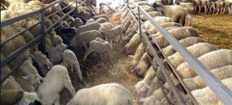 Ειδική, γενναία ρύθμιση χρεών κτηνοτρόφων και πτηνοτρόφων ζητά ο ΣΕΚ