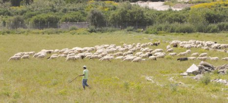 Για τον αποκλεισμό χιλιάδων κτηνοτρόφων από τις πληρωμές βιολογικής κτηνοτροφίας ρωτά ο Ν. Μωραΐτης