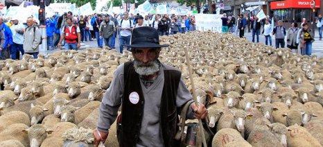 Μέτρα 600 εκ. ευρώ για να εξευμενίσει τους κτηνοτρόφους παίρνει η Γαλλία