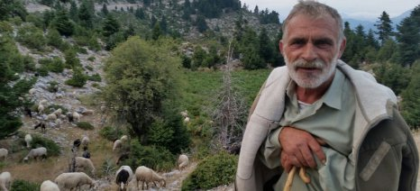 Συγκέντρωση Θεσσαλών κτηνοτρόφων στον Τύρναβο το Σάββατο