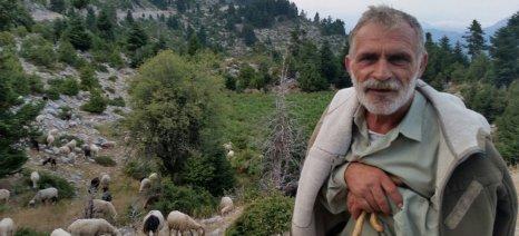 Aπό 26 Ιουλίου έως 4 Αυγούστου καλούνται οι κτηνοτρόφοι του δήμου Κεφαλονιάς να παραλάβουν την κατανομή των βοσκότοπων