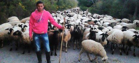 Βγήκε η απόφαση για τον καθορισμό της ενίσχυσης στα ειδικά δικαιώματα των κτηνοτρόφων