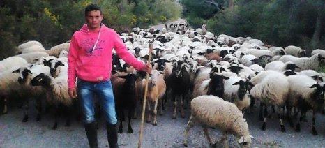 Διαδοχικές ενημερωτικές συναντήσεις με Κεφαλονίτες κτηνοτρόφους για πρόγραμμα ελέγχου της ποιότητας του γάλακτος