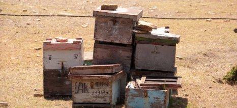 Νέα κατηγορία μελιού προτείνουν οι μελισσοκόμοι της Καλύμνου: Το έξτρα θυμαρίσιο