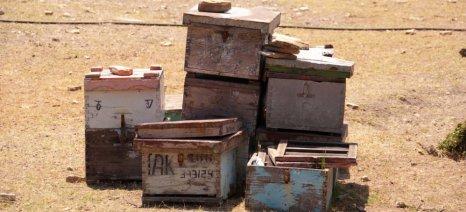 Ολοκληρώθηκε η καταγραφή των ζημιών από την πυρκαγιά στη Θάσο από τους εκτιμητές του ΕΛΓΑ