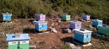 Συνεργασία Περιφέρειας και ΓΠΑ για την αντιμετώπιση των προβλημάτων της μελισσοκομίας στις Κυκλάδες