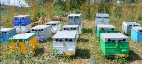 Συνελήφθη 43χρονος στη Χαλκιδική για κλοπές μελισσιών