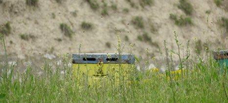 Επιστημονική διημερίδα μελισσοκομίας στο Ρέθυμνο
