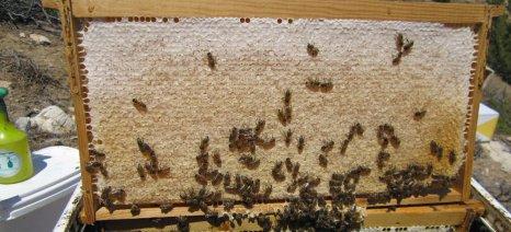 Έκτακτη γενική συνέλευση πραγματοποιούν σήμερα οι μελισσοκόμοι των Χανίων