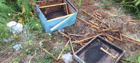 Αντιμέτωποι με τις αρκούδες οι μελισσοκόμοι στην ορεινή Ροδόπη