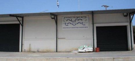 Ξεπέρασε το φράγμα των 3,80 ευρώ το κιλό το ελαιόλαδο στην Τριφυλία
