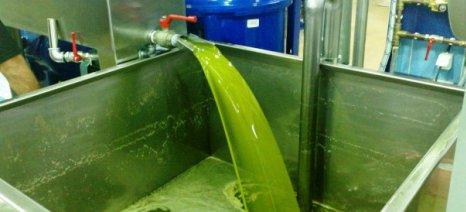 Σπάει νέο ρεκόρ η παραγωγή ελαιολάδου στη Μεσσηνία