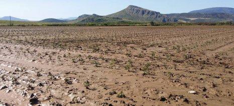 Έως 11 Ιουλίου οι δηλώσεις ζημιάς από τη βροχόπτωση στην Ορεστιάδα