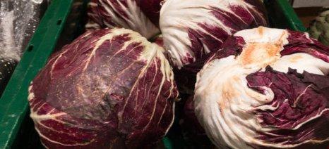 Ελλείψεις σε μεταποιημένα λαχανικά προβλέπεται ότι θα παρουσιαστούν στα ράφια της Γερμανίας λόγω ξηρασίας