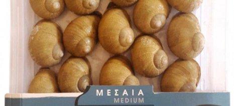 Λευκά ελληνικά σαλιγκάρια λανσάρει στην αγορά η λαρισινή εταιρεία Mediterranean escargots