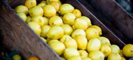 Εκατό τόνοι αγροτικών προϊόντων δεσμεύτηκαν στους Κήπους