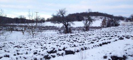 Ανήσυχοι οι αγρότες της Δυτ. Μακεδονίας για τις καταστροφές από τον παγετό