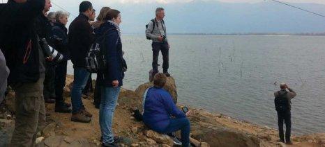 Οικολόγοι προτείνουν την επιδότηση των διχτυών των ψαράδων σε υγροβιότοπους κορμοράνων