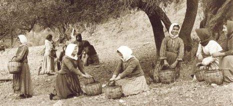 Τότε που το λιομάζωμα στην Κρήτη ήταν γιορτή