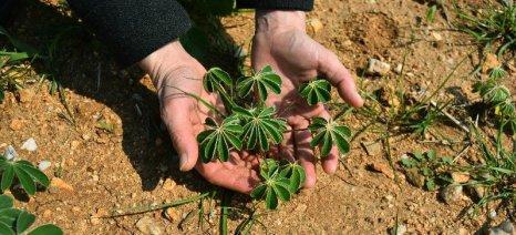 Εσπερίδα για τα κτηνοτροφικά φυτά από την Greenpeace στη Λέσβο