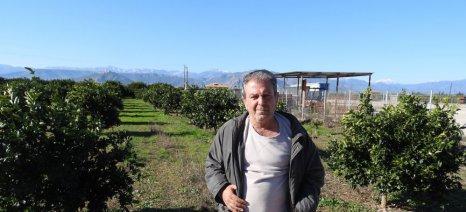 Χτυπημένη από το χαλάζι δύο φορές η αργολική παραγωγή πορτοκαλιών έχει μειωθεί φέτος κατά 30-40%