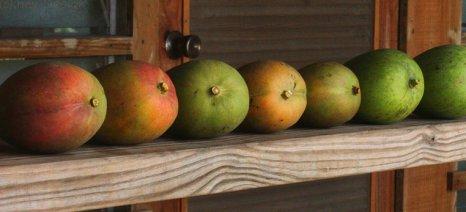 Χανιώτες που επενδύουν σε νέες καλλιέργειες και ανοίγουν καινούριες αγορές