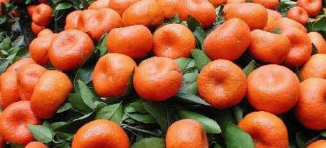 Επιταχύνονται οι εξαγωγές μανταρινιών, καλοί ρυθμοί για τα υπόλοιπα οπωροκηπευτικά