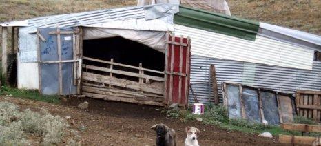 Ξυλοδαρμός αλλοδαπών εργατών σε κτηνοτροφική μονάδα στην Πιερία - εισαγγελική παρέμβαση