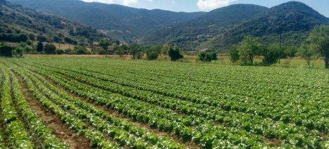 Τη διστακτική στροφή των Ελλήνων αγροτών προς τα κηπευτικά και τα δενδρώδη επιβεβαιώνει η ΕΛΣΤΑΤ