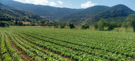 Νέα κατηγορία ασφαλιζόμενων καλλιεργειών «φυλλώδη λαχανικά» για πολλαπλές σπορές κηπευτικών πρόσθεσε στον τιμοκατάλογό του ο ΕΛΓΑ