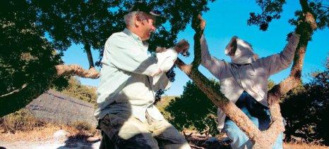 Εκδηλώσεις με «άρωμα μαστίχας» στο Χαϊδάρι από το Σύλλογο Πυργουσών Αττικής