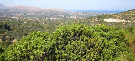 Πρόταση νόμου για ειδικές ενισχύσεις στα νησιά με ελάχιστο όριο τα 2 αντί των 5 στρεμμάτων