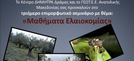 """Μαθήματα ελαιοκομίας στις 5-7 Μαρτίου από τον ΕΛΓΟ """"Δήμητρα"""" και το ΓΕΩΤΕΕ στη Δράμα"""