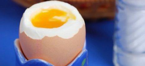 Ποιούς κινδύνους κρύβουν τα μελάτα αβγά;