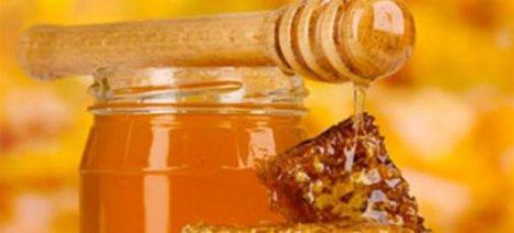 Έλεγχοι του ΕΦΕΤ στην αγορά για την αποτροπή της νοθείας του μελιού