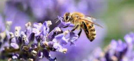 """Σε εξαγωγική πορεία το μέλι λεβάντας της εταιρείας """"12 στρέμματα"""""""