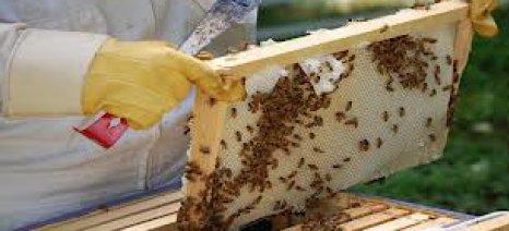 Από 4 έως 6 Δεκεμβρίου το 7ο Φεστιβάλ Ελληνικού Μελιού & Προϊόντων Μέλισσας