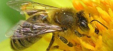 Από 2 έως 4 Δεκεμβρίου το 8ο Φεστιβάλ Ελληνικού Μελιού & Προϊόντων Μέλισσας