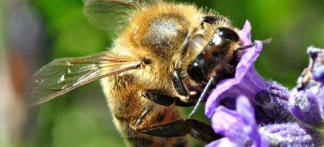 Οι μέλισσες ξέρουν να μετρούν και μπορούν να αναγνωρίζουν ανθρώπινα πρόσωπα