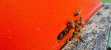 Εγκρίθηκαν 29 προγράμματα μελισσοκομικών συνεταιρισμών για το 2015