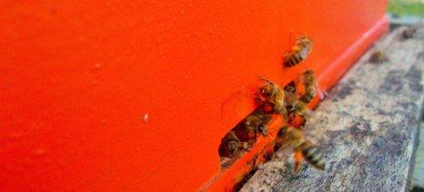 Στα 5,7 εκατ. ευρώ το κονδύλι για το πρόγραμμα μελισσοκομίας το 2015