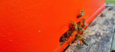 Εγκρίθηκαν τα προγράμματα των μελισσοκομικών συνεταιρισμών των νησιών του Αιγαίου