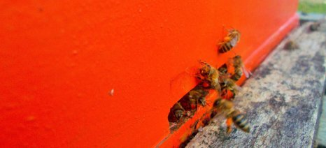 Σε διαβούλευση η απόφαση για τα προγράμματα μελισσοκομίας που έχει προκαλέσει πόλεμο μεταξύ ΟΜΣΕ και ΥΠΑΑΤ