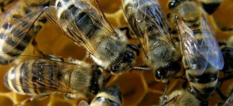 Ραγδαία μείωση των εντόμων παγκοσμίως – καμπανάκι για τις καλλιέργειες