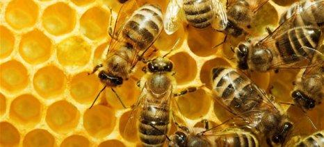 Τα γεωργικά φάρμακα απειλούν τις μέλισσες, διαμαρτύρονται οι Ηπειρώτες μελισσοκόμοι
