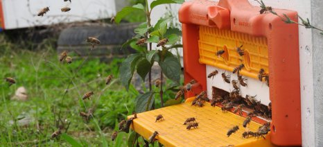 Πρόβλημα σε μετακινούμενους μελισσοκόμους δημιουργεί η εγκύκλιος για τον κατά κύριο επάγγελμα αγρότη